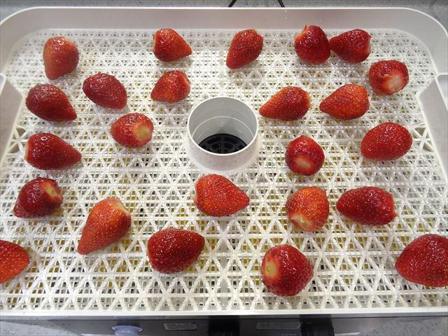 イチゴ乾燥前
