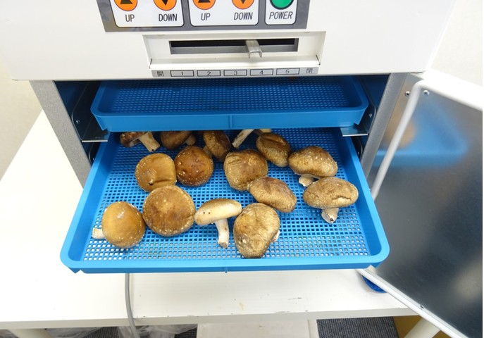 業務用食品乾燥機で干し椎茸作り