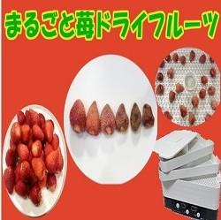 苺を丸ごとドライフルーツに!
