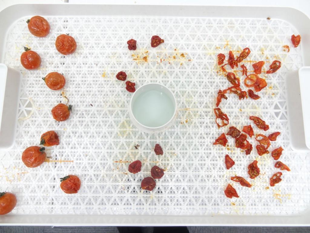 乾燥18時間後 プチトマト