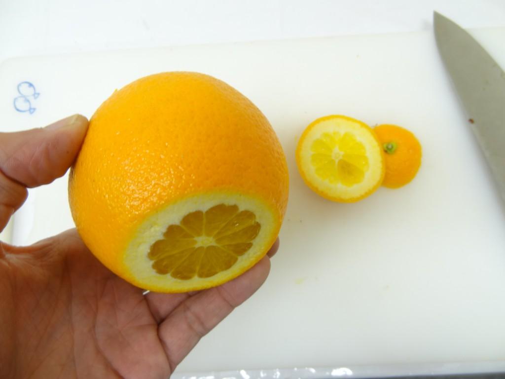 オレンジ 皮むき フルーツレザー作り