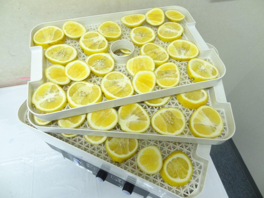 食品乾燥機トレイにレモンのせる