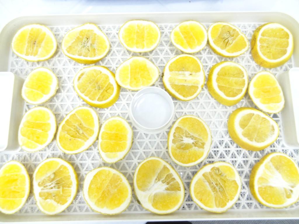 フルーツディハイドレーター レモン乾燥 6時間後