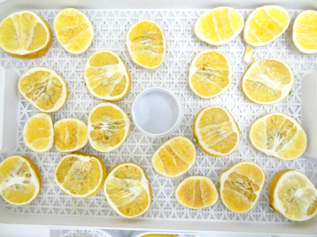 フルーツディハイドレーター レモン乾燥 18時間後