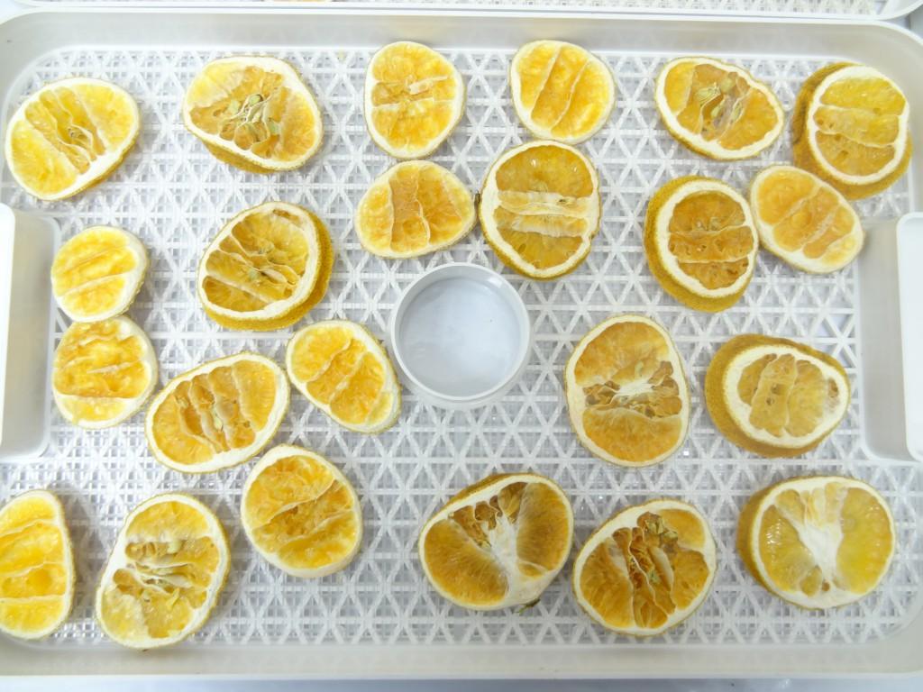 フルーツディハイドレーター レモン乾燥 24時間後