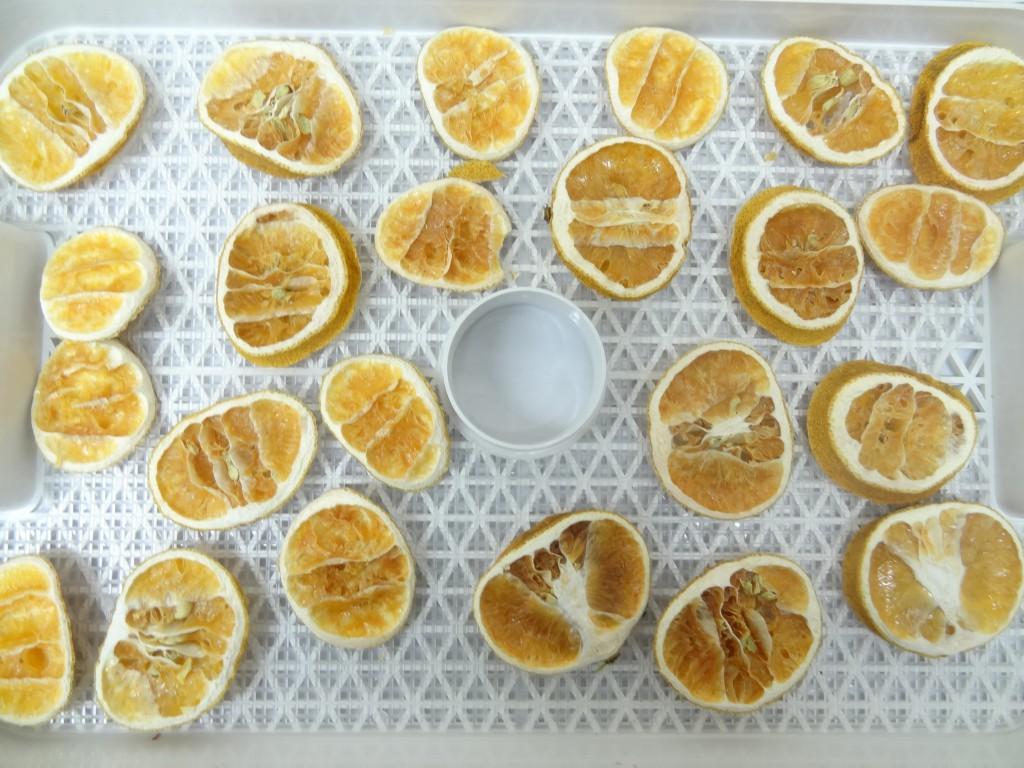 フルーツディハイドレーター レモン乾燥 30時間後