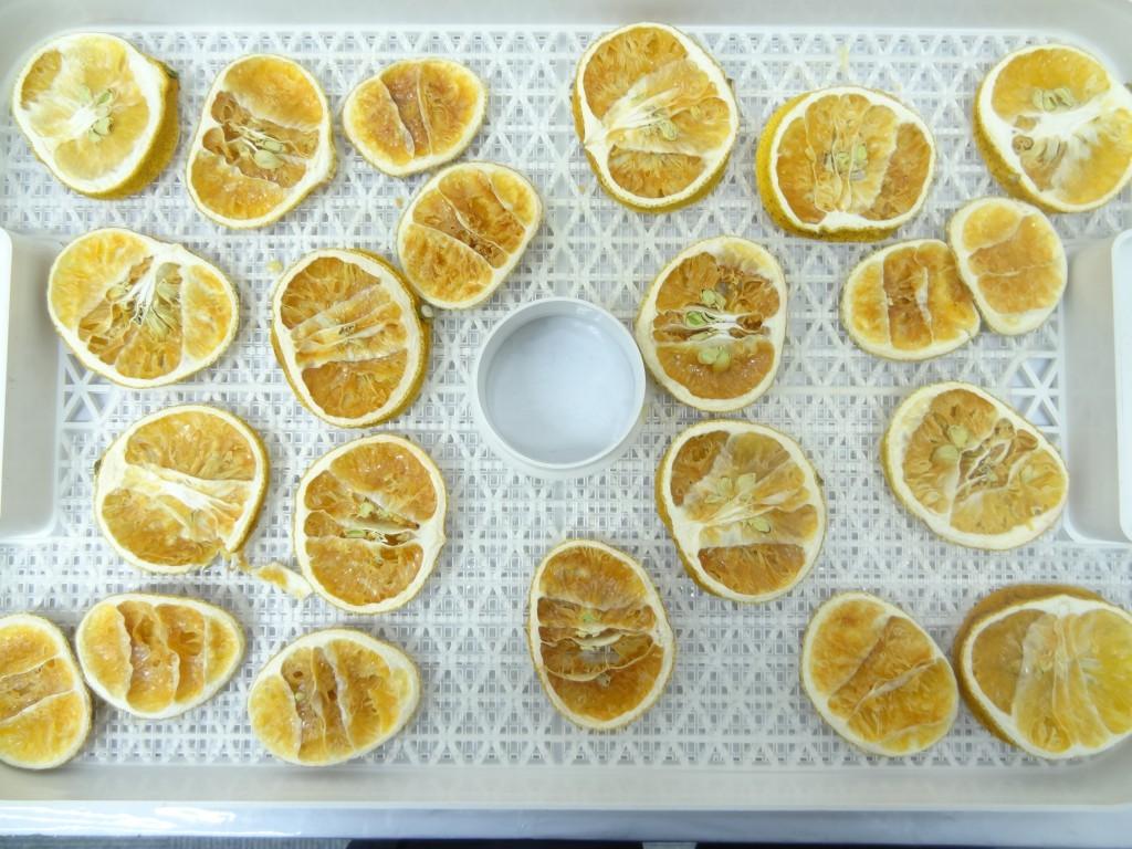 フルーツディハイドレーター レモン乾燥 36時間後
