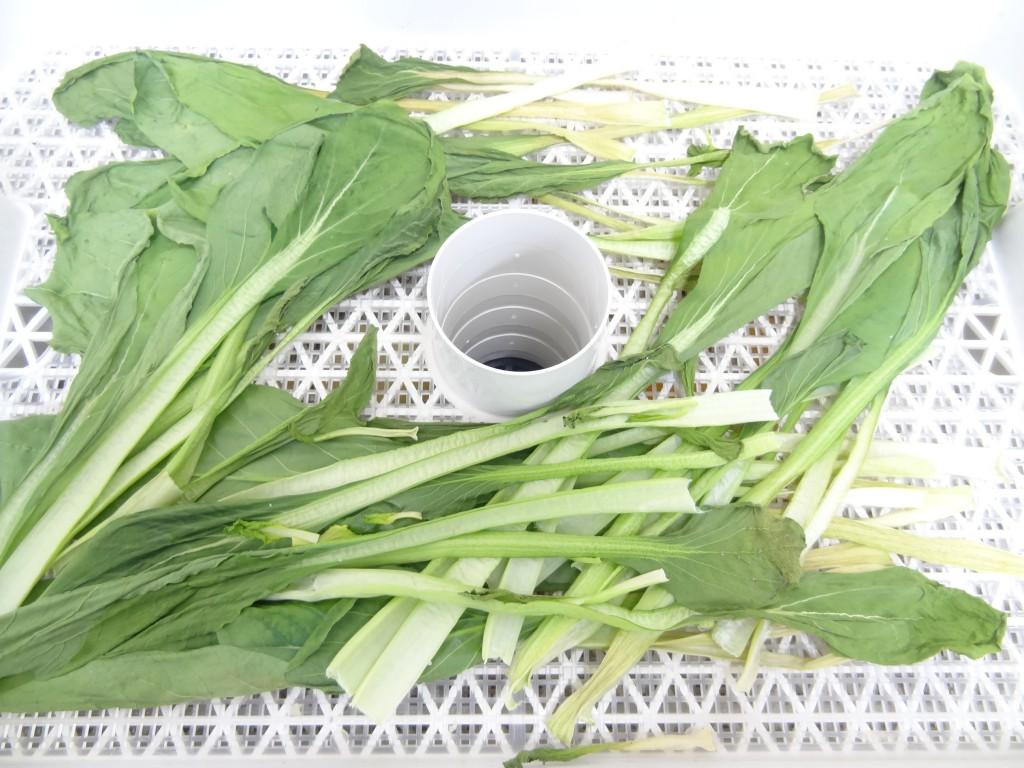 6時間乾燥後の小松菜