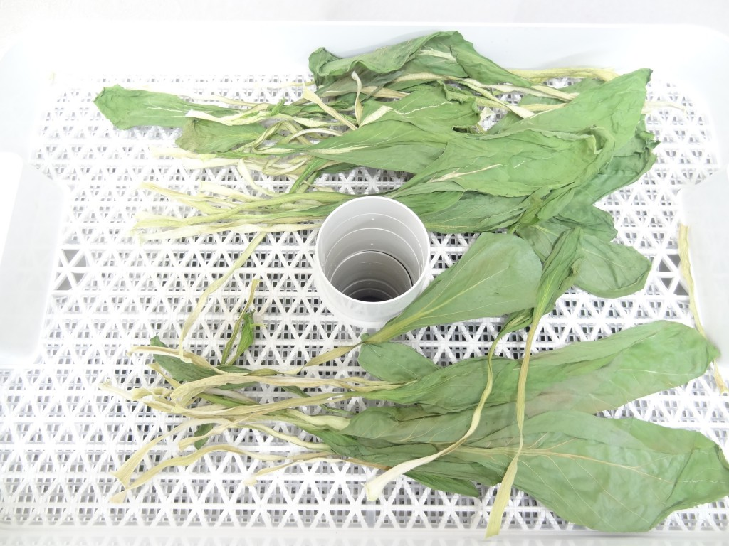 18時間乾燥後の小松菜