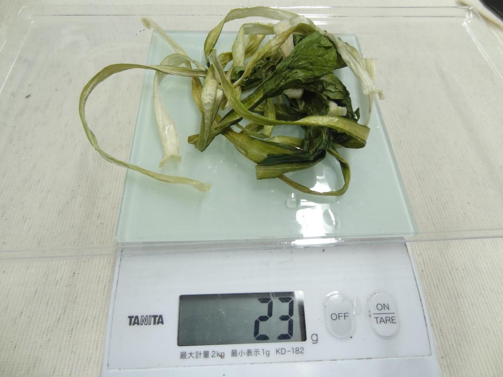 30分後 重量を量る食品乾燥機の小松菜