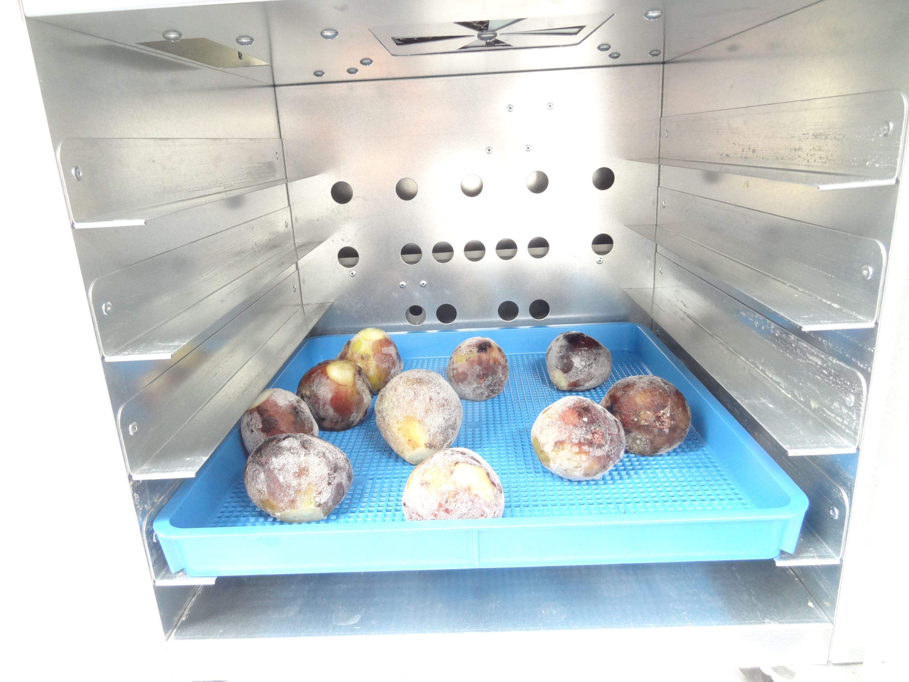 果物乾燥機プチミニⅡでいちじくの乾燥
