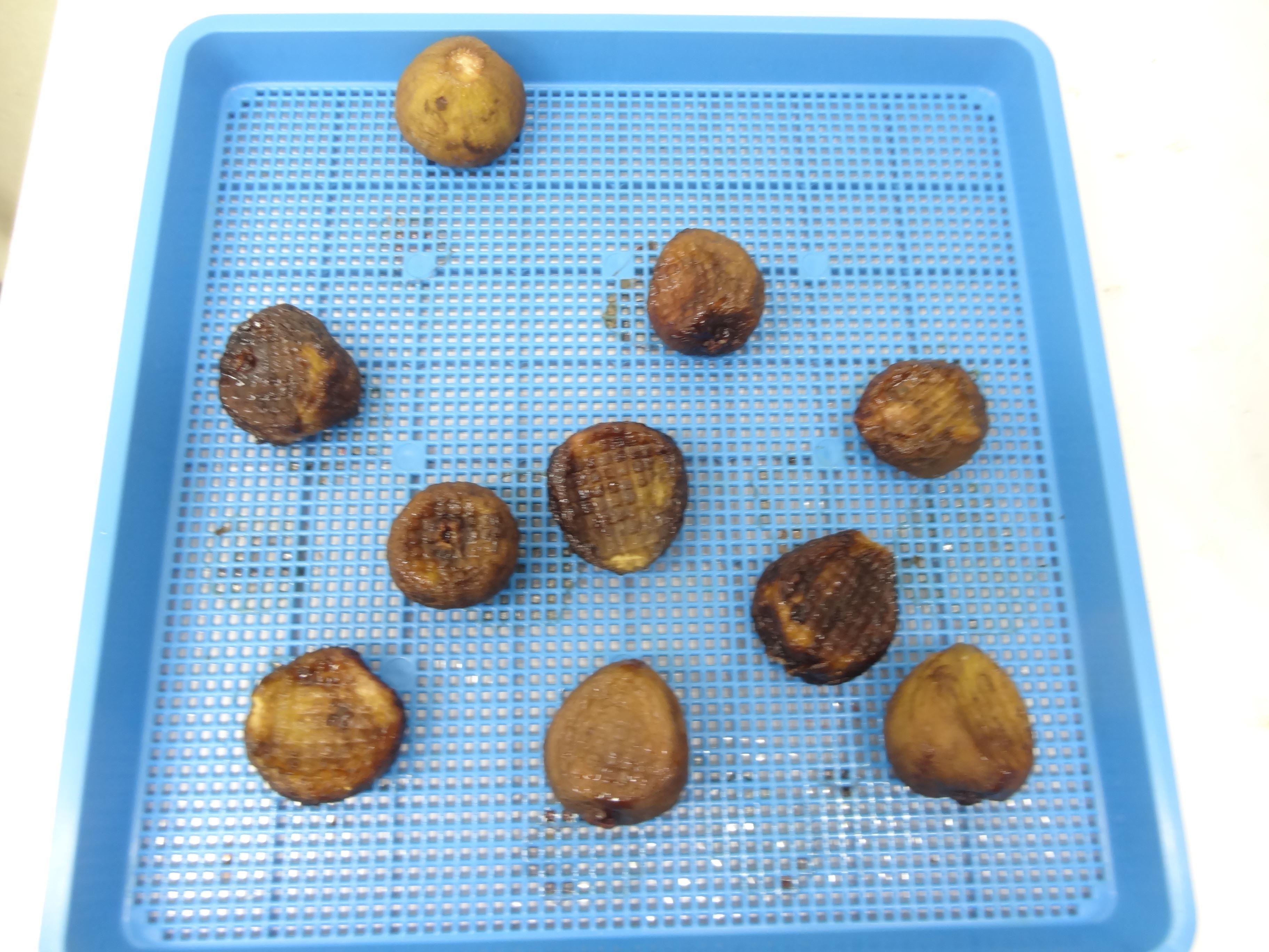 いちじく 6時間乾燥後 果物乾燥機プチミニⅡ